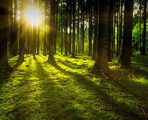 Bäume im Wald auf moosbewachsenem Waldboden mit Sonnenstrahlen